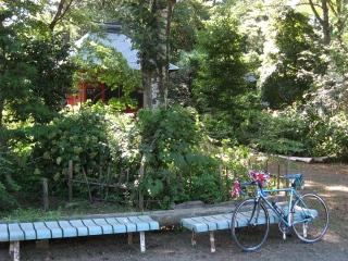sashima17-2.jpg